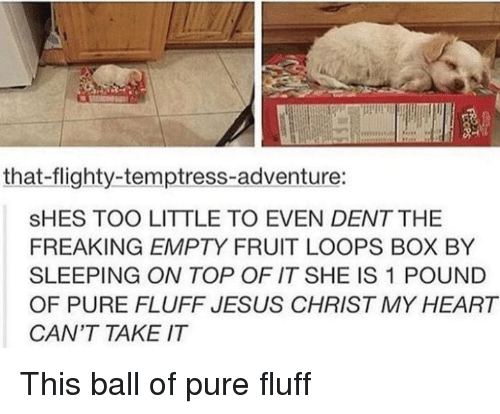 Jesus, Heart, and Sleeping: that-flighty-temptress-adventure:  SHES TOO LITTLE TO EVEN DENT THE  FREAKING EMPTY FRUIT LOOPS BOX BY  SLEEPING ON TOP OF IT SHE IS 1 POUND  OF PURE FLUFF JESUS CHRIST MY HEART  CAN'T TAKE IT This ball of pure fluff