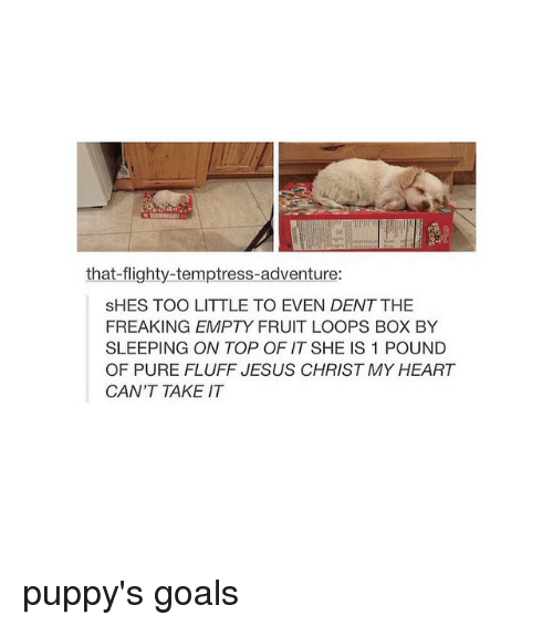Fruit Looping: that flighty-temptress-adventure:  SHES TOO LITTLE TO EVEN DENTTHE  FREAKING EMPTY FRUIT LOOPS BOX BY  SLEEPING ON TOP OF IT SHE IS 1 POUND  OF PURE FLUFF JESUS CHRISTMY HEART  CAN'T TAKE IT puppy's goals