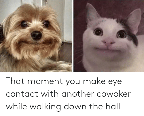 contact: That moment you make eye contact with another cowoker while walking down the hall