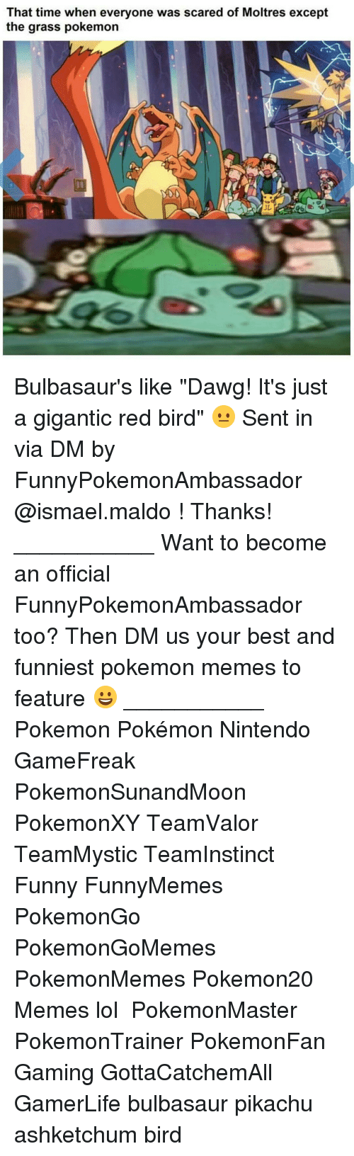 "Bulbasaur, Memes, and 🤖: That time when everyone was scared of Moltres except  the grass pokemon Bulbasaur's like ""Dawg! It's just a gigantic red bird"" 😐 Sent in via DM by FunnyPokemonAmbassador @ismael.maldo ! Thanks! ___________ Want to become an official FunnyPokemonAmbassador too? Then DM us your best and funniest pokemon memes to feature 😀 ___________ Pokemon Pokémon Nintendo GameFreak PokemonSunandMoon PokemonXY TeamValor TeamMystic TeamInstinct Funny FunnyMemes PokemonGo PokemonGoMemes PokemonMemes Pokemon20 Memes lol ポケットモンスター PokemonMaster PokemonTrainer PokemonFan Gaming GottaCatchemAll GamerLife bulbasaur pikachu ashketchum bird"