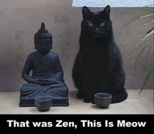 Memes, 🤖, and Zen: That was Zen, This Is Meow