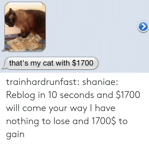 Nothing to Lose: that's my cat with $1700 trainhardrunfast:  shaniae:  Reblog in 10 seconds and $1700 will come your way  I have nothing to lose and 1700$ to gain