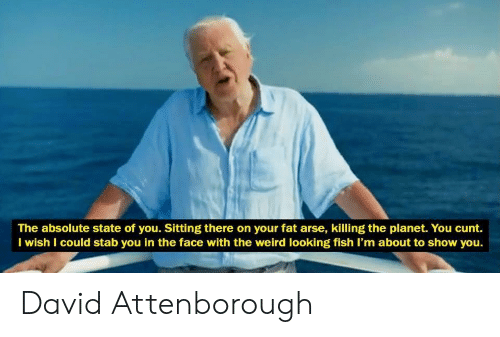 Weird, Cunt, and Fish: The absolute state of you. Sitting there on your fat arse, killing the planet. You cunt.  I wish I could stab you in the face with the weird looking fish I'm about to show you. David Attenborough