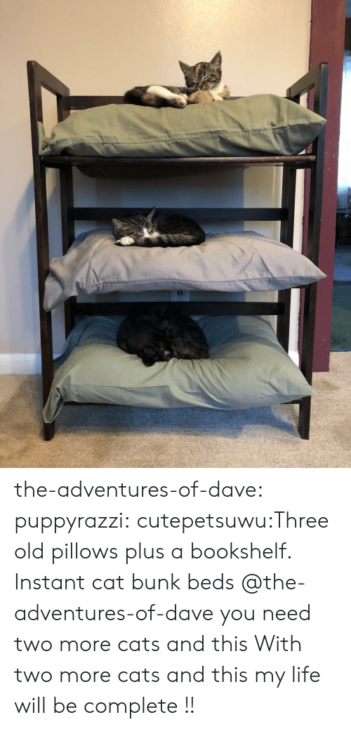 beds: the-adventures-of-dave:  puppyrazzi:  cutepetsuwu:Three old pillows plus a bookshelf. Instant cat bunk beds  @the-adventures-of-dave you need two more cats and this  With two more cats and this my life will be complete !!