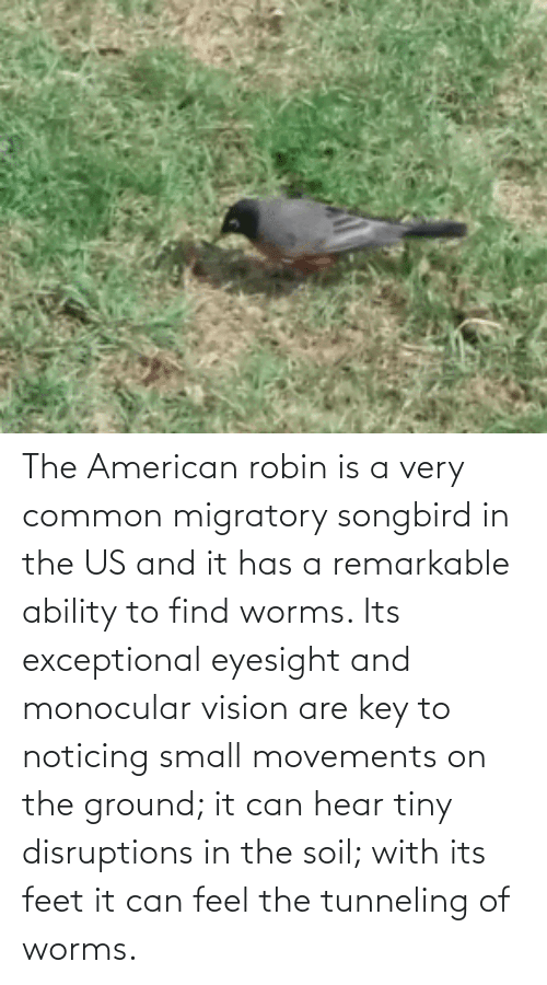 exceptional: The American robin is a very common migratory songbird in the US and it has a remarkable ability to find worms. Its exceptional eyesight and monocular vision are key to noticing small movements on the ground; it can hear tiny disruptions in the soil; with its feet it can feel the tunneling of worms.