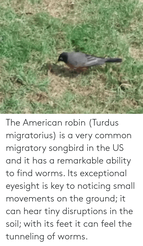 exceptional: The American robin (Turdus migratorius) is a very common migratory songbird in the US and it has a remarkable ability to find worms. Its exceptional eyesight is key to noticing small movements on the ground; it can hear tiny disruptions in the soil; with its feet it can feel the tunneling of worms.