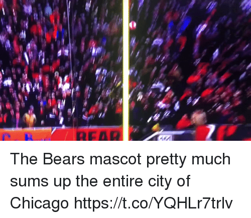 Chicago, Football, and Nfl: The Bears mascot pretty much sums up the entire city of Chicago https://t.co/YQHLr7trlv
