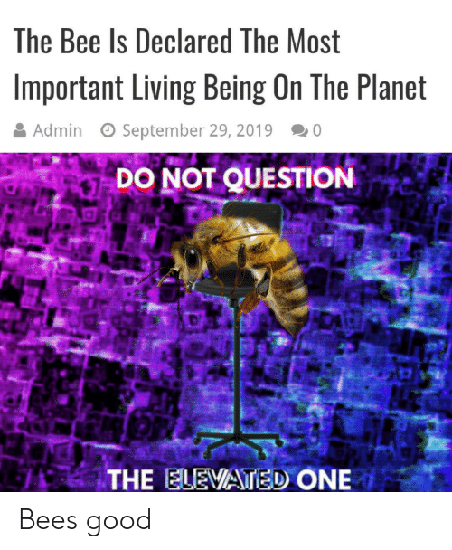 Admin: The Bee Is Declared The Most  Important Living Being On The Planet  Admin  September 29, 2019  0  DO NOT QUESTION  THE ELEVATED ONE Bees good