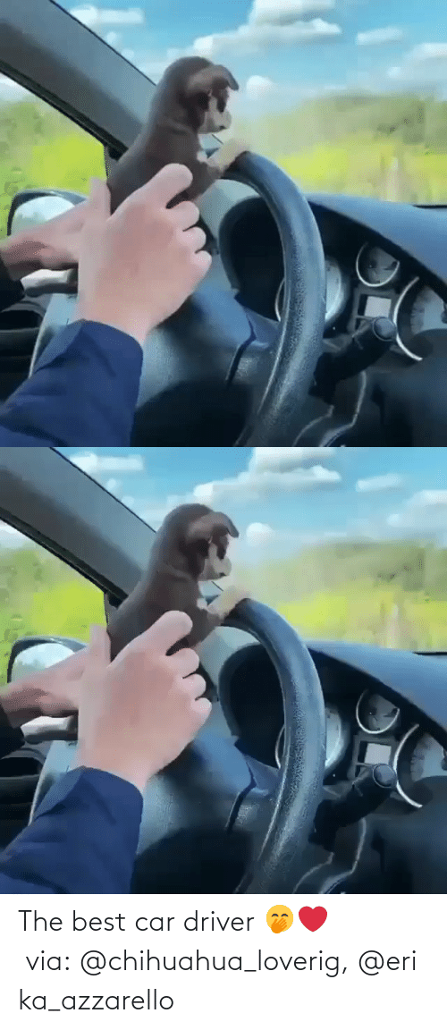 driver: The best car driver 🤭❤️ via: @chihuahua_loverig, @erika_azzarello