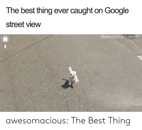 Google, Tumblr, and Best: The best thing ever caught on Google  street view  @asleepinthemuseum awesomacious:  The Best Thing