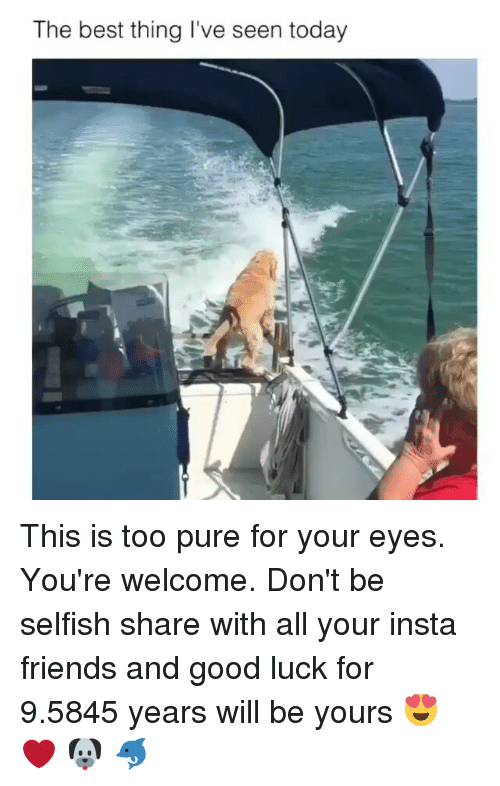 Friends, Memes, and Best: The best thing I've seen today This is too pure for your eyes. You're welcome. Don't be selfish share with all your insta friends and good luck for 9.5845 years will be yours 😍 ❤ 🐶 🐬