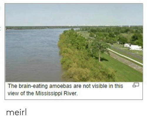 Brain, Mississippi, and MeIRL: The brain-eating amoebas are not visible in this  view of the Mississippi River. meirl