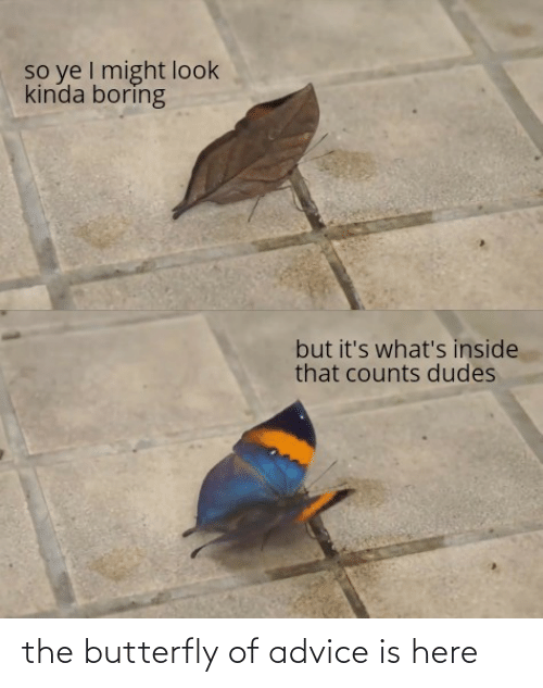 Advice: the butterfly of advice is here