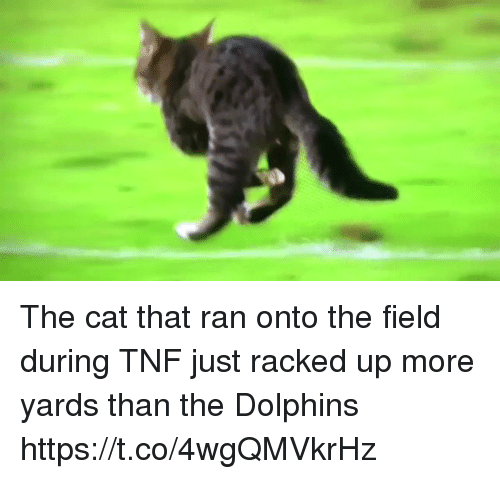 racked: The cat that ran onto the field during TNF just racked up more yards than the Dolphins https://t.co/4wgQMVkrHz