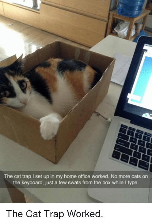 home office: The cat trap I set up in my home office worked. No more cats on  the keyboard, just a few swats from the box while I type <p>The Cat Trap Worked.</p>