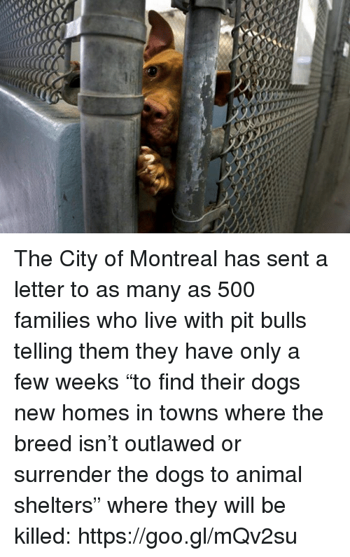 "Senting: The City of Montreal has sent a letter to as many as 500 families who live with pit bulls telling them they have only a few weeks ""to find their dogs new homes in towns where the breed isn't outlawed or surrender the dogs to animal shelters"" where they will be killed: https://goo.gl/mQv2su"