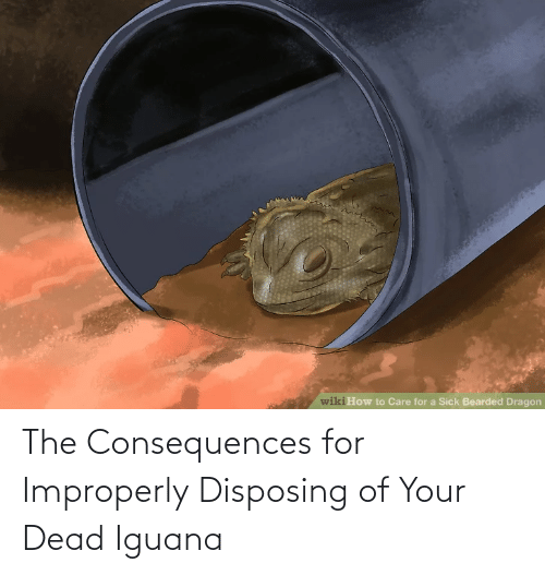 Consequences: The Consequences for Improperly Disposing of Your Dead Iguana