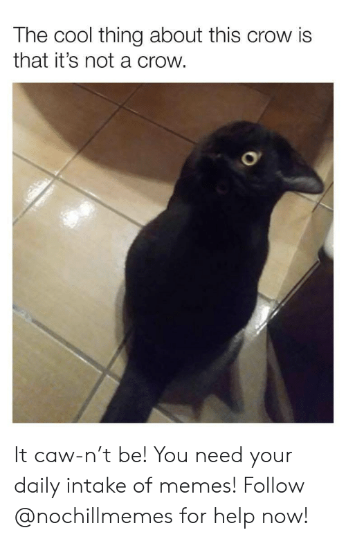 Memes, Cool, and Help: The cool thing about this crow is  that it's not a crow. It caw-n't be! You need your daily intake of memes! Follow @nochillmemes for help now!