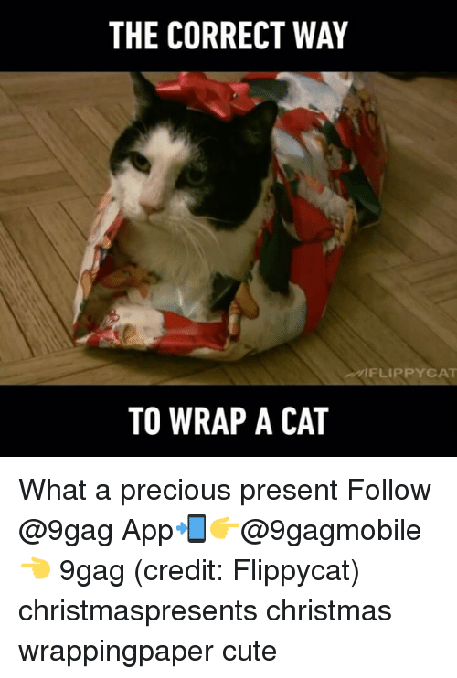 ˜†: THE CORRECT WAY  FLIP PYCAT  TO WRAP A CAT What a precious present Follow @9gag App📲👉@9gagmobile 👈 9gag (credit: Flippycat) christmaspresents christmas wrappingpaper cute