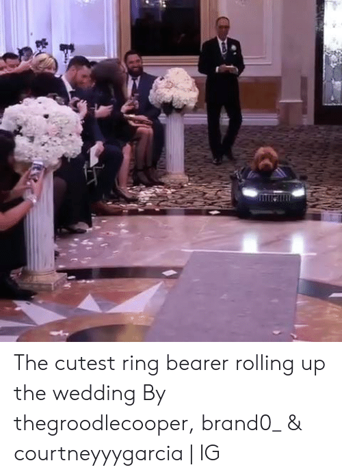 Dank, Wedding, and 🤖: The cutest ring bearer rolling up the wedding  By thegroodlecooper, brand0_ & courtneyyygarcia | IG