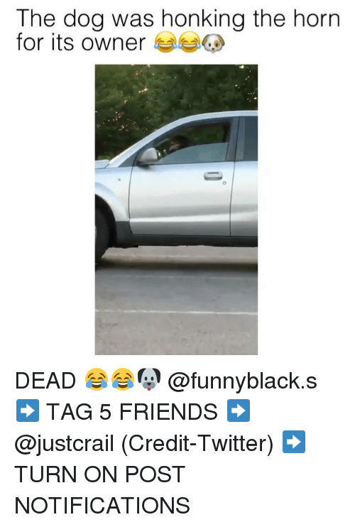 turn ons: The dog was honking the horn  for its owner DEAD 😂😂🐶 @funnyblack.s ➡️ TAG 5 FRIENDS ➡️ @justcrail (Credit-Twitter) ➡️ TURN ON POST NOTIFICATIONS