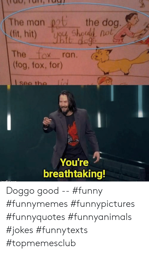 The Fox: the dog.  ygu, Shoud not  The man  (fit, hit)  The fox ran.  (fog, fox, for)  lid  Isee the  You're  breathtaking! Doggo good -- #funny #funnymemes #funnypictures #funnyquotes #funnyanimals #jokes #funnytexts #topmemesclub