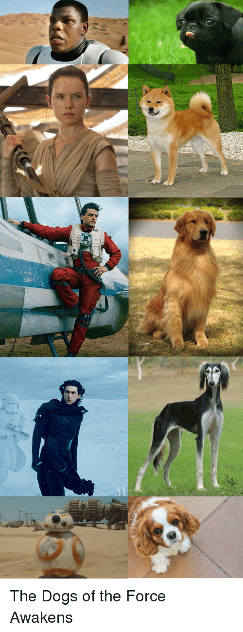 dog style: The Dogs of the Force Awakens