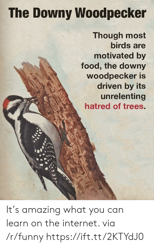 Downy, Food, and Funny: The Downy Woodpecker  Though most  birds are  motivated by  food, the downy  Woodpecker is  driven by its  unrelenting  hatred of trees. It's amazing what you can learn on the internet. via /r/funny https://ift.tt/2KTYdJ0