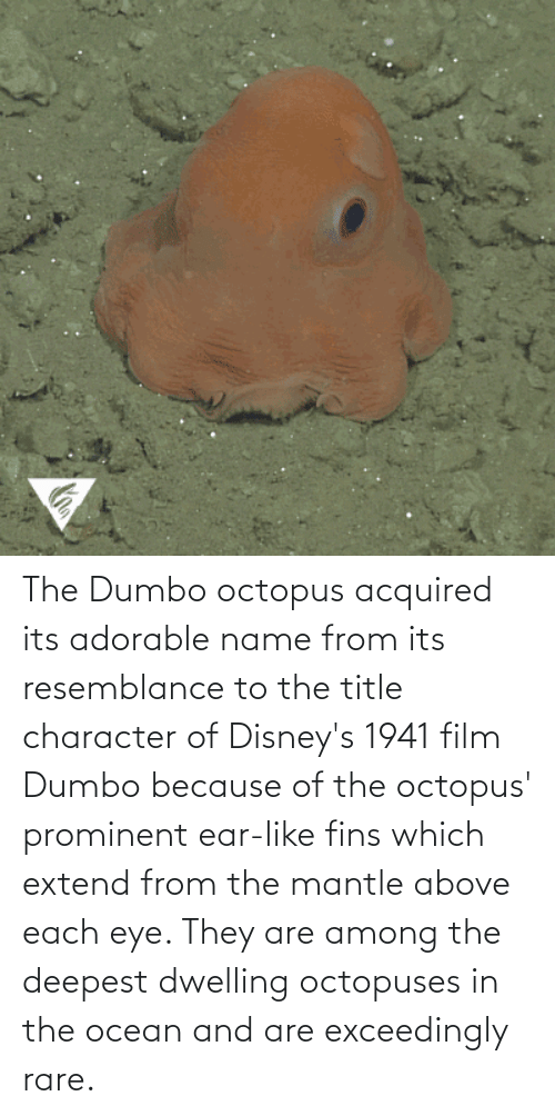 Dumbo: The Dumbo octopus acquired its adorable name from its resemblance to the title character of Disney's 1941 film Dumbo because of the octopus' prominent ear-like fins which extend from the mantle above each eye. They are among the deepest dwelling octopuses in the ocean and are exceedingly rare.