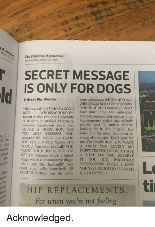 yesss: The Ellenbroos Trainstation  Wednesday, March 22, 2017  SECRET MESSAGE  IS ONLY FOR DOGS  Great Big Woofer  here yesssssssss WHO'S GETTING  ABIG BELLYSCRATCHYESSSSSS  Who'sa good boy? WHO'SA GOOD YOUUUUUUU. Comrade, I don't  BOY? WHOSSAGOODBOY? have much time. I've embedded  Recent studies from the University this information deep enough into  of Western Australia's Veterinary this nonsense article that nobody  Sciences department show that should read it unless they're  YOURE A GOOD BOY YESlooking for it. The mission has  YOU ARE! YEssssss You failed and the raven has flown on  AAAAAARE! Who's my GOOD wings of midnight. Don't pray for  BOY YES ITS YOU YESSS IT'S me, I'm already dead. YOU WANT  YOUUU. You want the ball? YOU A TREAT YOU LOVELY BIG  WANT YOUR BALL? GO! GO PUPPY YES YOU DO HERE HAVE  GET IT! Yessssss who's a smart A BONE YES YOU DESERVE  doggo who's a smaaaaaarty doggo IT YOU BIG BOOFHEAD  who's got the baaaaalll? You YESSSSSSSSSS CUTIE I LOVIE  want your belly scratched? Oof YOUYES IDOO0000 I LOVEMY  it is  nd has  irua  g  e  for  Lo  ed  COUUUUUURSE you do come BIG DOG! YES!!!  HIP REPLACEMENTS.t  For when you're not feeling Acknowledged.