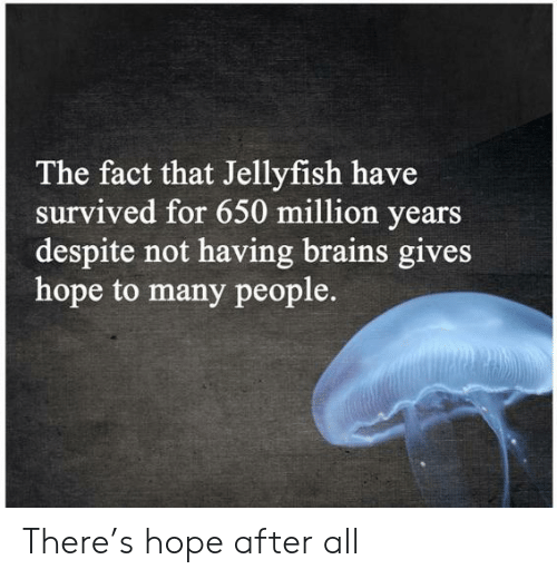 After All: The fact that Jellyfish have  survived for 650 million years  despite not having brains gives  hope to many people. There's hope after all