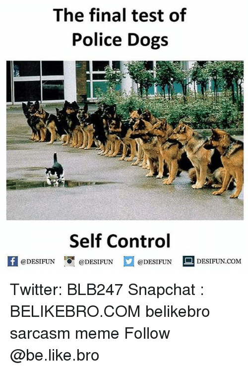 Be Like, Dogs, and Finals: The final test of  Police Dogs  Self Control  feDESIFUNDESIFUNDESIFUN DESIFUN.CoM  @DESIFUN ■ DESIFUN.COM Twitter: BLB247 Snapchat : BELIKEBRO.COM belikebro sarcasm meme Follow @be.like.bro
