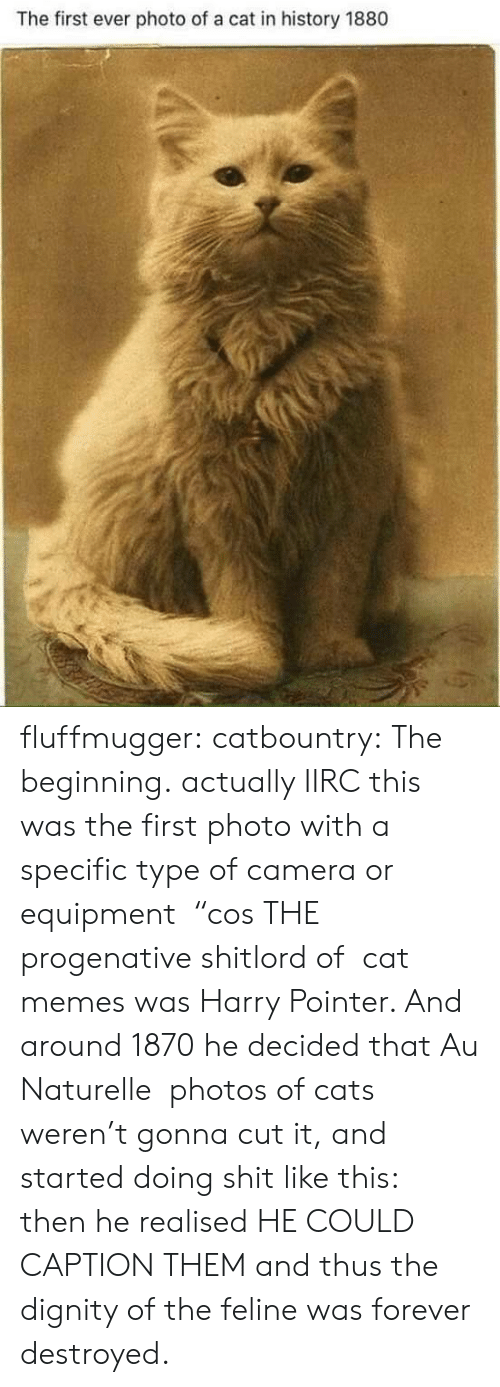 "Equipment: The first ever photo of a cat in history 1880 fluffmugger: catbountry: The beginning. actually IIRC this was the first photo with a specific type of camera or equipment  ""cos THE progenative shitlord of  cat memes was Harry Pointer. And around 1870 he decided that Au Naturelle  photos of cats weren't gonna cut it, and started doing shit like this:  then he realised HE COULD CAPTION THEM and thus the dignity of the feline was forever destroyed."