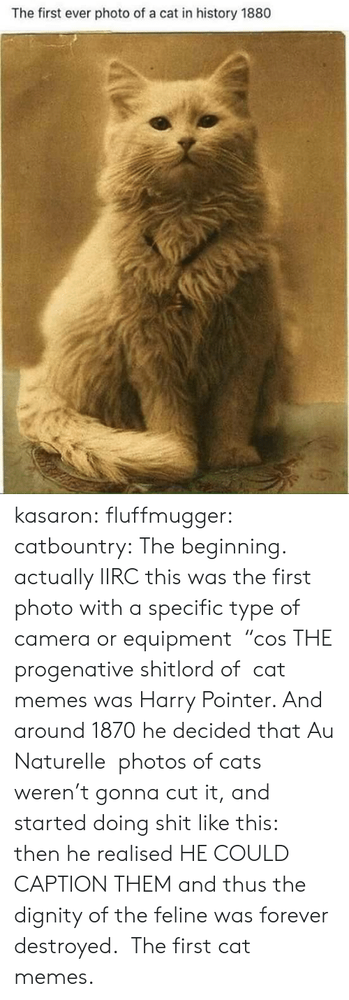 "Equipment: The first ever photo of a cat in history 1880 kasaron:  fluffmugger:  catbountry: The beginning. actually IIRC this was the first photo with a specific type of camera or equipment  ""cos THE progenative shitlord of  cat memes was Harry Pointer. And around 1870 he decided that Au Naturelle  photos of cats weren't gonna cut it, and started doing shit like this:  then he realised HE COULD CAPTION THEM and thus the dignity of the feline was forever destroyed.   The first cat memes."