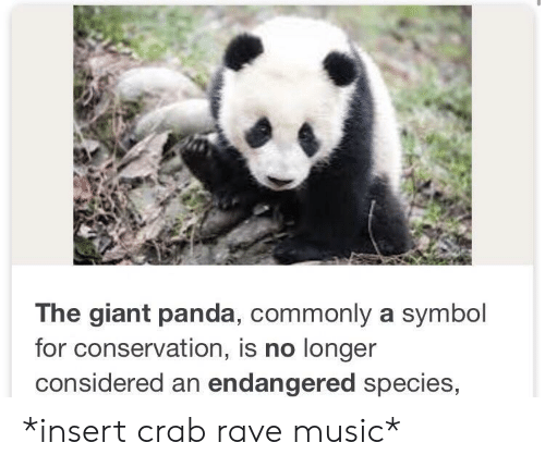 giant panda: The giant panda, commonly a symbol  for conservation, is no longer  considered an endangered species, *insert crab rave music*