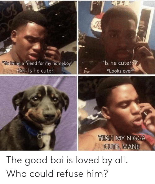 boi: The good boi is loved by all. Who could refuse him?
