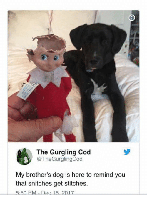 cod: The Gurgling Cod  @TheGurglingCod  My brother's dog is here to remind you  that snitches get stitches.  5:50 PM-Dec 15. 2017
