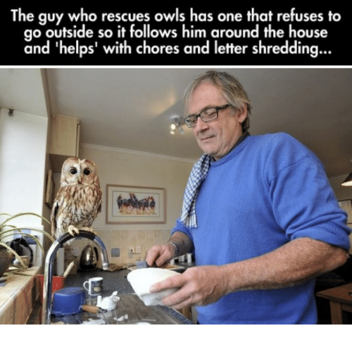the guy who rescues owls has one that refuses to go outside so it