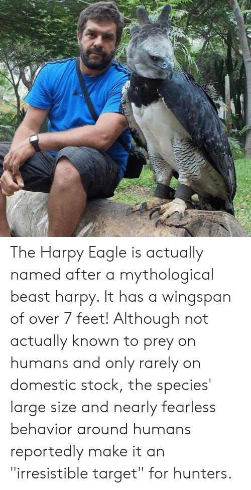 "Irresistible: The Harpy Eagle is actually named after a mythological beast harpy. It has a wingspan of over 7 feet! Although not actually known to prey on humans and only rarely on domestic stock, the species' large size and nearly fearless behavior around humans reportedly make it an ""irresistible target"" for hunters."
