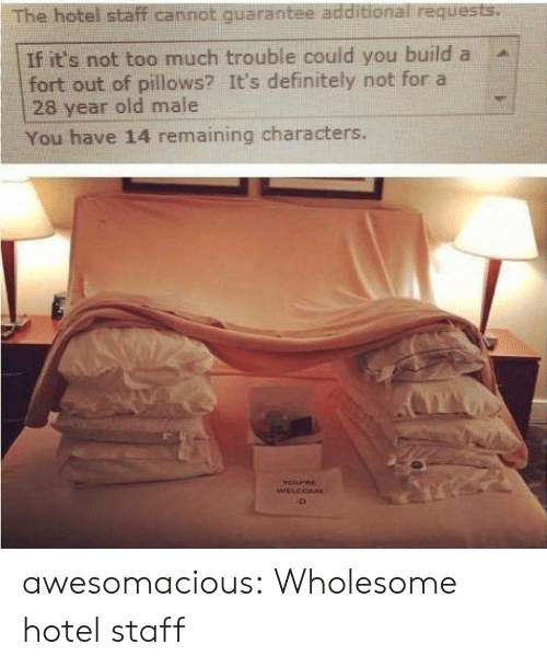 Definitely, Too Much, and Tumblr: The hotel staff cannot quarantee additional requests.  If it's not too much trouble could you build a  fort out of pillows? It's definitely not for a  28 year old male  You have 14 remaining characters.  YOPRE  WELCOME awesomacious:  Wholesome hotel staff
