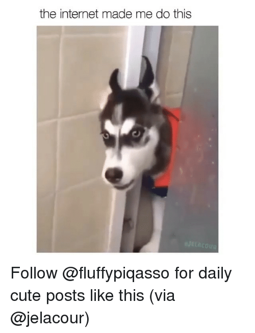 Cute, Internet, and Memes: the internet made me do this Follow @fluffypiqasso for daily cute posts like this (via @jelacour)