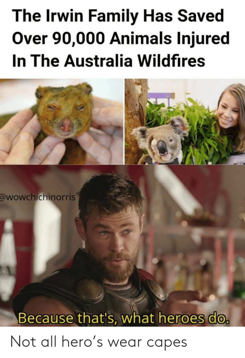 Because Thats: The Irwin Family Has Saved  Over 90,000 Animals Injured  In The Australia Wildfires  @wowchichinorris  Because that's, what heroes do. Not all hero's wear capes