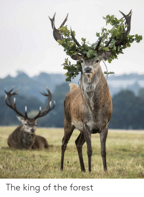 The Forest, Forest, and King: The king of the forest