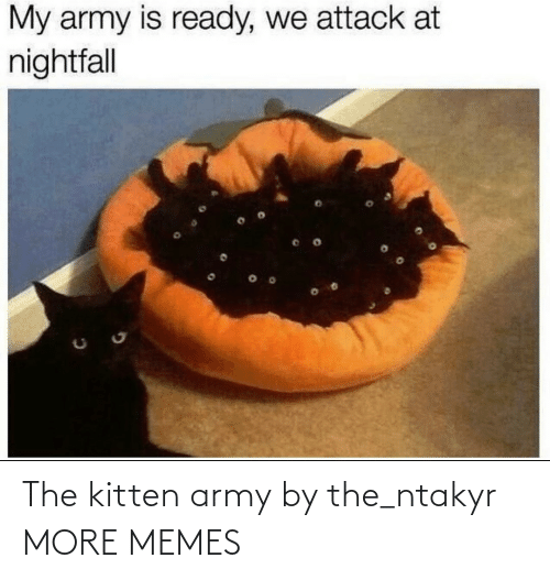 memes: The kitten army by the_ntakyr MORE MEMES