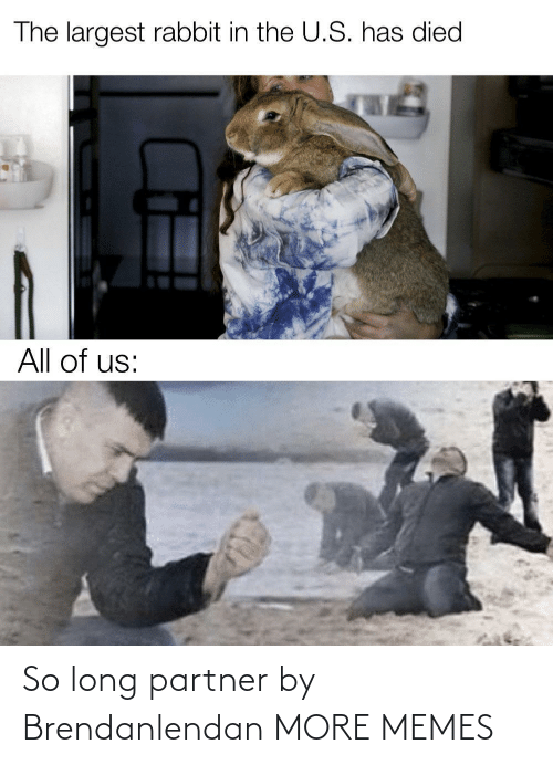 U S: The largest rabbit in the U.S. has died  All of us: So long partner by Brendanlendan MORE MEMES