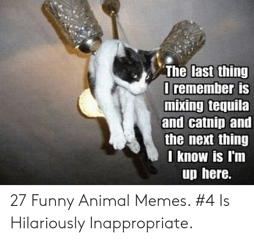 Hilariously Inappropriate: The last thing  I remember is  and catnip and  the next thing  I know is l'm  up here. 27 Funny Animal Memes. #4 Is Hilariously Inappropriate.