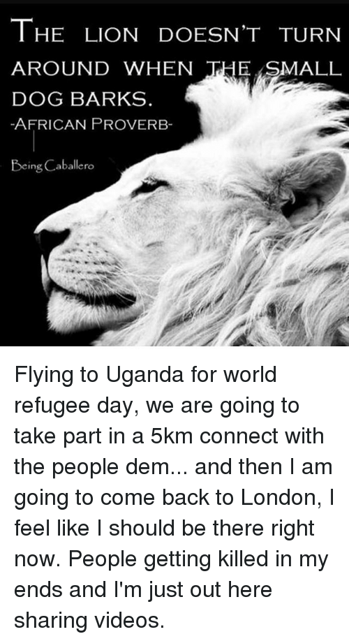Memes, Videos, and Lion: THE LION DOESN'T TURN  AROUND WHEN  THE SMALL  DOG BARKS  -AFRICAN PROVERB-  Being Caballero Flying to Uganda for world refugee day, we are going to take part in a 5km connect with the people dem... and then I am going to come back to London, I feel like I should be there right now. People getting killed in my ends and I'm just out here sharing videos.