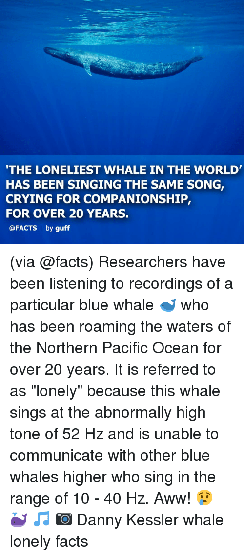 """guff: THE LONELIEST WHALE IN THE WORLD  HAS BEEN SINGING THE SAME SONG,  CRYING FOR COMPANIONSHIP,  FOR OVER 20 YEARS.  @FACTS 