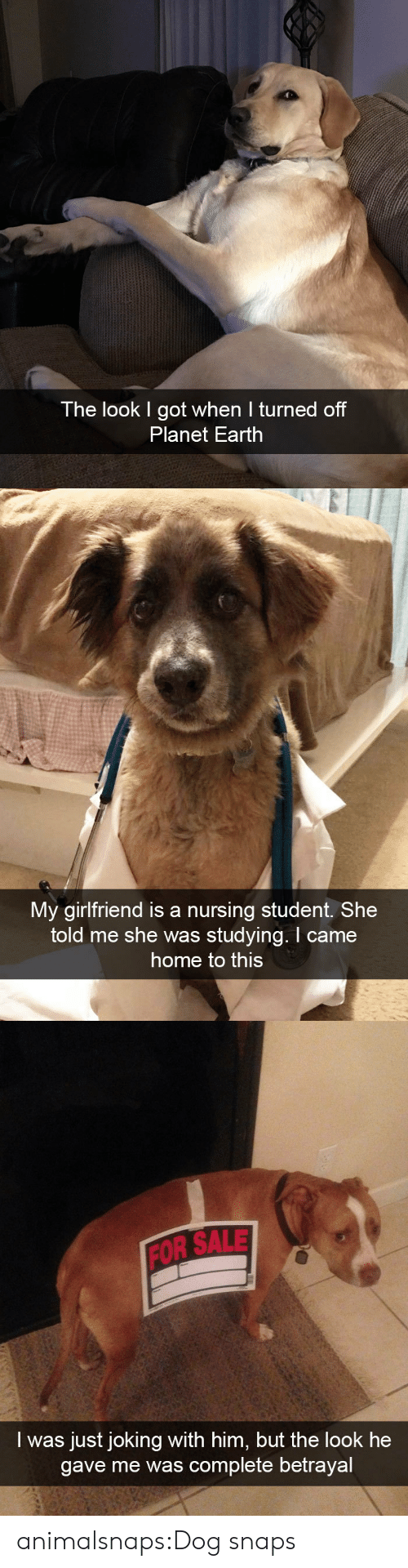 Nursing: The look I got when I turned off  Planet Earth   My girlfriend is a nursing student. She  told me she was studying. I came  home to this   FOR SALE  I was just joking with him, but the look he  gave me was complete betrayal animalsnaps:Dog snaps