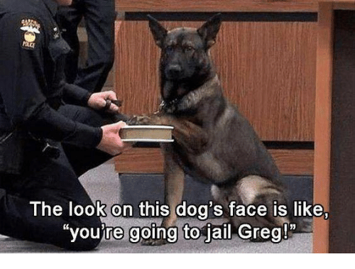 "Jail, Memes, and 🤖: The look on this dog's face is like,  ""you're going to jail Greg!"""